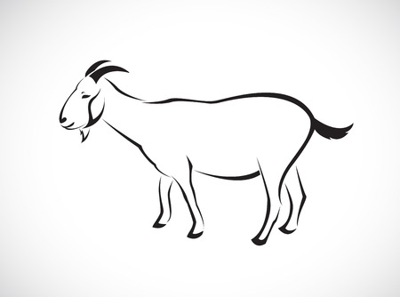 Vector image of an goat on white background Vector