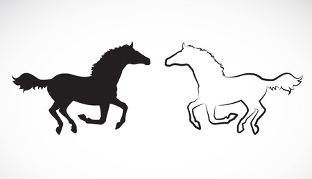 horseback riding: Vector image of an horse on white background