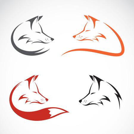 fox face: Vector de imagen de un dise�o del zorro en el fondo blanco Vectores