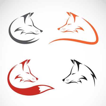 white wolf: Vector image of an fox design on white background