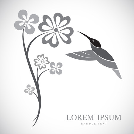 Vector design of hummingbird and flowers on white background Vector