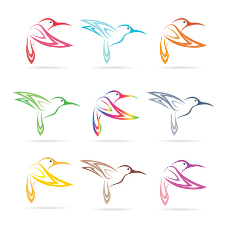 colibries: Grupo vector del colibrí en el fondo blanco