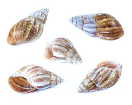 Shellfish set isolate on a white background photo