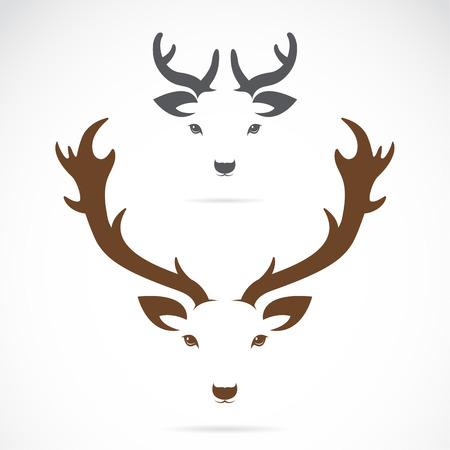 cuernos: Vector de imagen de una cabeza de ciervo en un fondo blanco Vectores