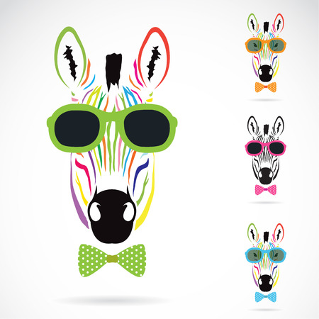 Vector image of a zebra wear glasses on white background. Illustration