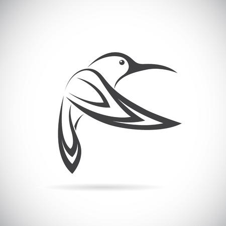 hummingbird: Vector image of an hummingbird design on white background Illustration