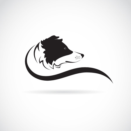 Vector image of an border collie dog on white background Çizim