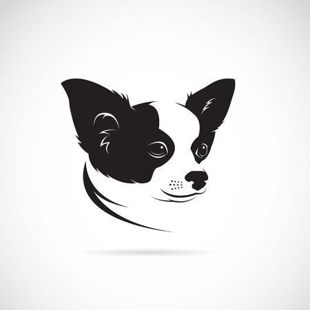 cane chihuahua: Vector immagine di un cane chihuahua su sfondo bianco