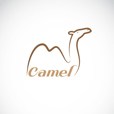 dunes: Vector image of an camel design on white background