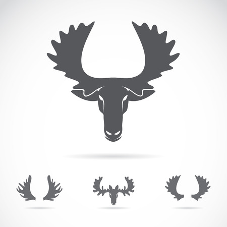 Vector image of an moose head on a white background Vector