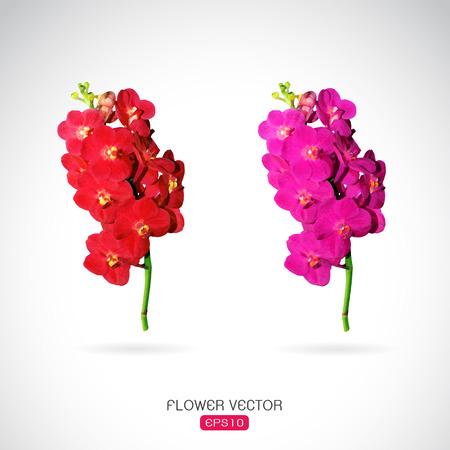 vanda: Vector image of orchid flower on white background Illustration