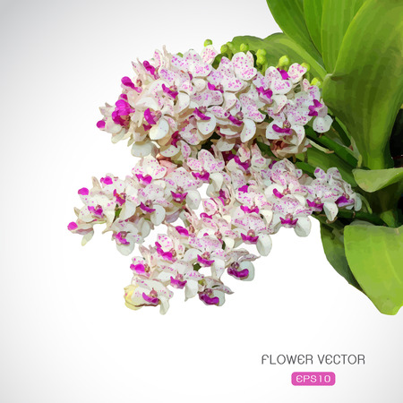 Vector image of orchid flower on white background Vector