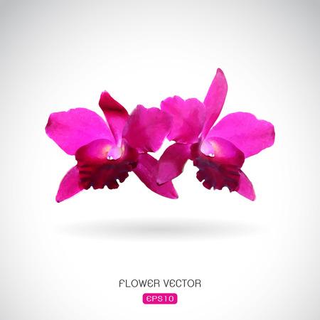 flor de durazno: Imagen del vector de la flor de la orquídea en el fondo blanco Vectores