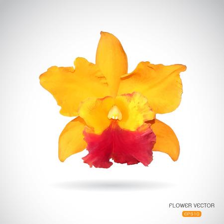 carpel: Vector image of orchid flower on white background Illustration
