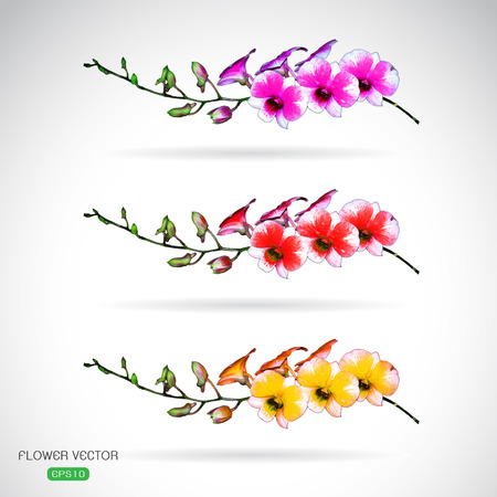 peach blossom: Vector image of orchid flower on white background Illustration