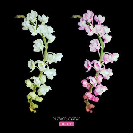 flor de durazno: Vector de imagen de flor de la orquídea en el fondo negro