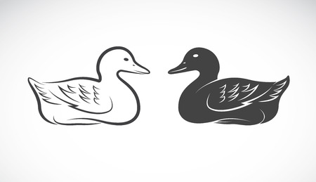 mallard: Vector image of an duck on white background