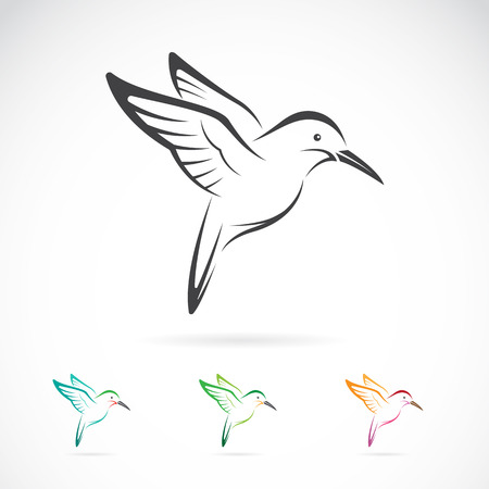 hover: Vector image of an hummingbird design on white background Illustration