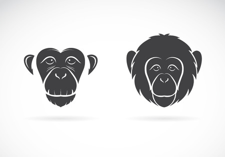monkey face: Vector image of monkey face on white background Illustration