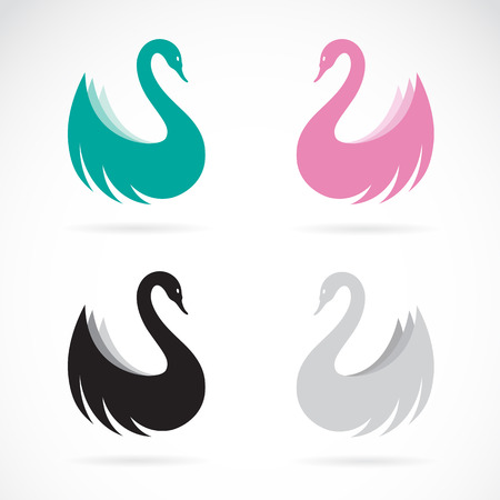 swimming swan: Vector images of swan design on a white background.