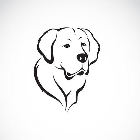 guide dog: Vector image of golden retriever on white background