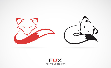 foxes: Vector image of an fox design on white background