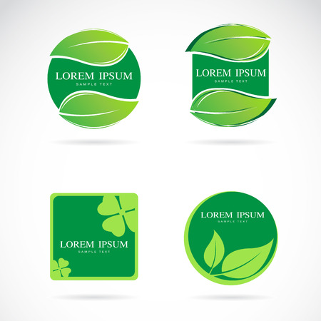 flower designs: Vector green leaf frame on a white background, Labels and Stickers