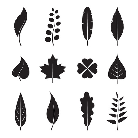 linden tree: Vector leaves icon set on white background