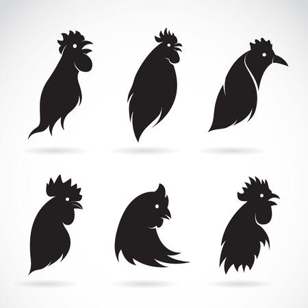 animal cock: Vector immagine di una testa di pollo su sfondo bianco