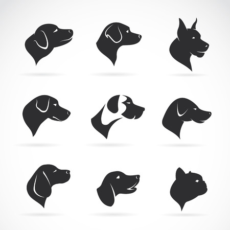 Vector image of an dog head on white background Çizim