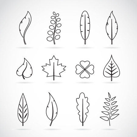 beech: Vector leaves icon set on white background