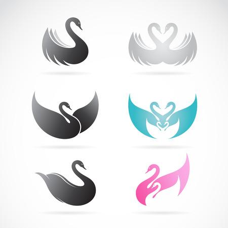 cisnes: Vector conjunto de diseño del cisne en el fondo blanco