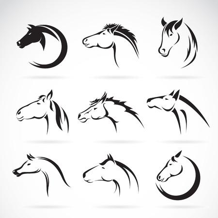 dibujos lineales: Grupo de vector de dise�o de la cabeza de caballo sobre fondo blanco.