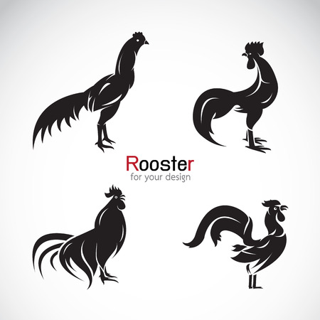 gallo: Grupo vectorial de dise�o de gallo sobre fondo blanco.