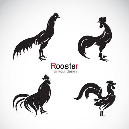 animal cock: Gruppo di vettore del disegno gallo su sfondo bianco.