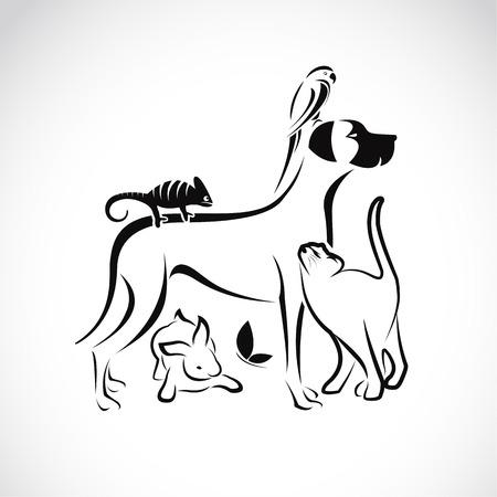 Grupo de vector de animales domésticos - perro, gato, loro, camaleón, conejo, mariposa aislada en el fondo blanco Vectores