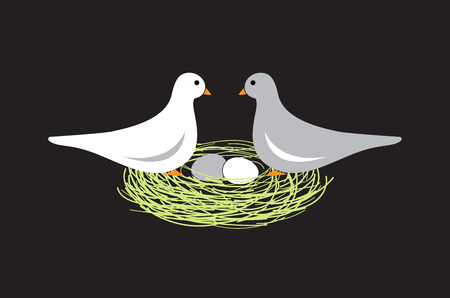 pigeon egg: Birds in nest with eggs on black background
