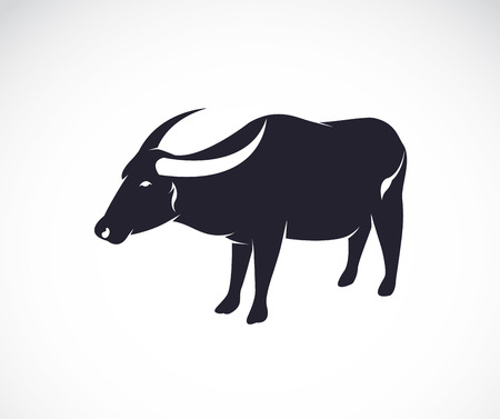 Vector image of an buffalo on white background.