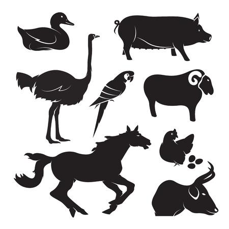 Vector farm animal set on white background, horse,pig,chicken,bird,duck,goose,cow,sheep Vector