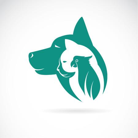 動物: 一個狗貓和鳥類在白色背景矢量圖像。動物設計