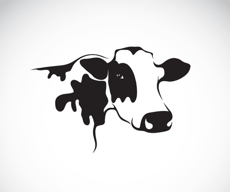 cow cartoon: Vector image of an cow on white background