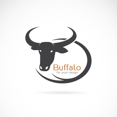 longhorn cattle: Vector image of an buffalo design on white background.