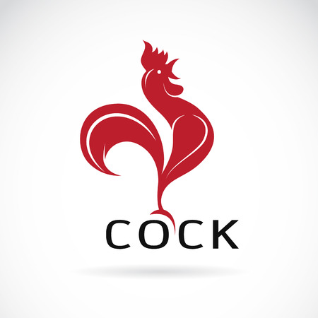 gallo: Imagen vectorial de un dise�o de la polla en el fondo blanco