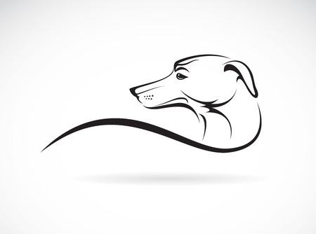 pinscher: Vector image of an dog (azawakh) on white background