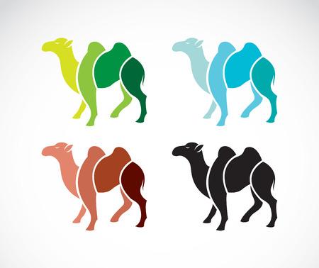 camello: imagen de un diseño de camellos en el fondo blanco