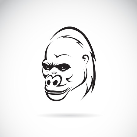 Vector image of an gorilla head on white background Illustration
