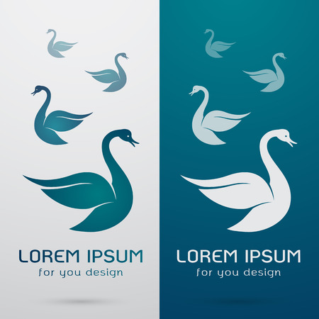 swimming swan: Vector image of an swan design on white background and blue background Illustration