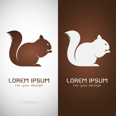 Vector image of an squirrel  design on white background and brown background, Logo, Symbol