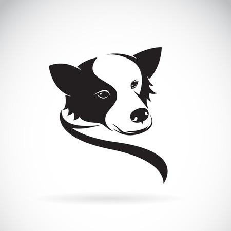 Vector image of an border collie dog on white background Illustration