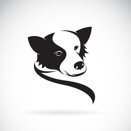 collie: Vector image of an border collie dog on white background Illustration
